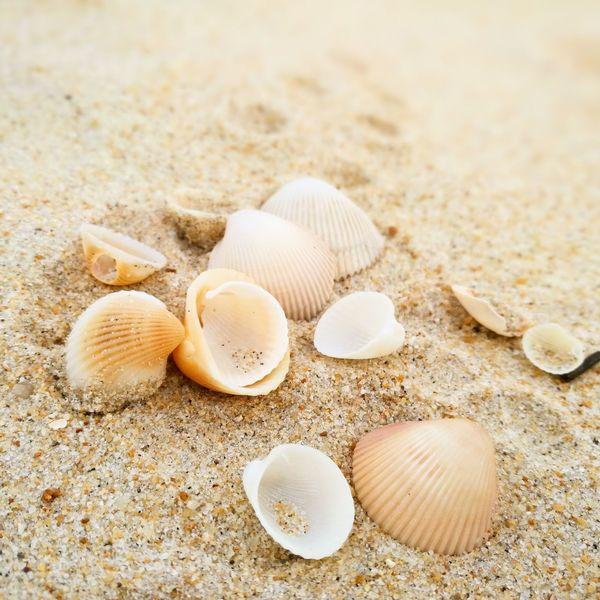 Sea Seashell Seashells Beach Beautiful Nature Beachphotography Shore Nature