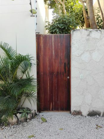 Tree Outdoors Day Plant No People Built Structure Nature Architecture Holidays Tulum Mexico Travelling Tropical Climate Door Wood Entry Enter Wall