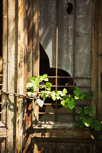 Obsolete ...in Old Port of Trieste Abandoned Architecture Building Exterior Built Structure Close-up Day Growth Leaf Metal Nature No People Obsolete Old Outdoors Plant Plant Part Sunlight Weathered Window Wood - Material EyeEmNewHere The Still Life Photographer - 2018 EyeEm Awards
