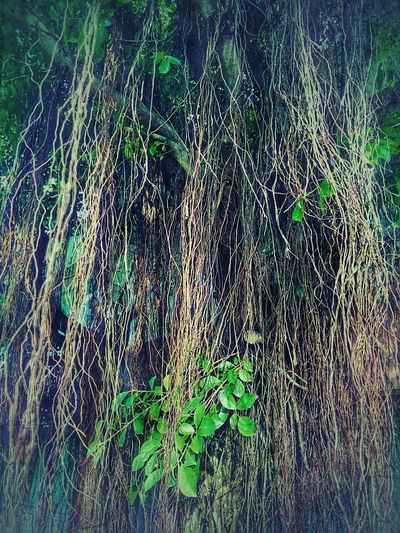 Roots Root Roots Of Tree Root Of A Tree Root Of The Tree Root Of Tree Green Color Nature