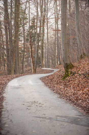 Autumn Bare Trees Day Forest Landscape Nature No People Outdoors Swabian Alb Tree Winding Road