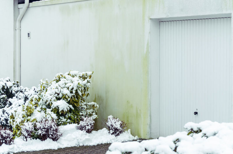Snow on plants by wall
