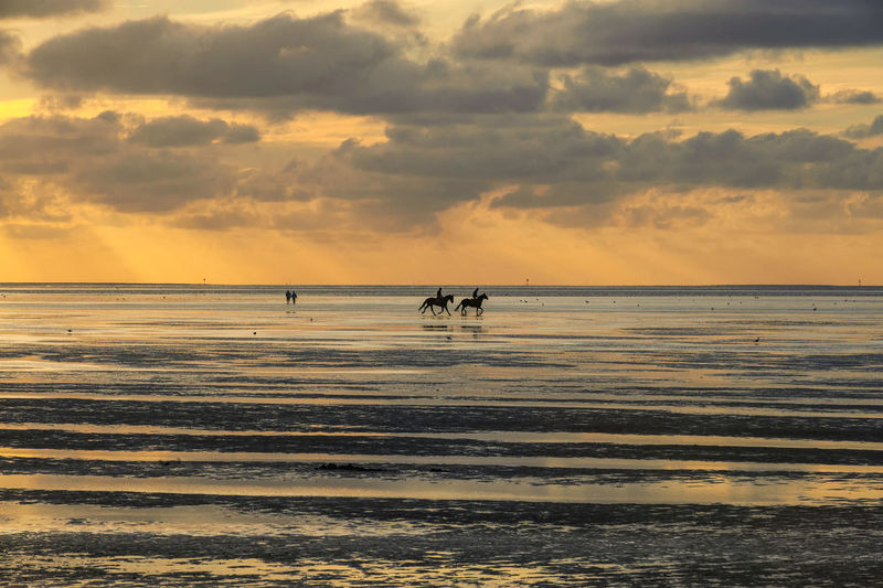 Two riders and some walkers enjoy the sunset during low tide at Sahlenburg, Germany EyeEmNewHere Cloud - Sky Horizon Over Water Sky Sunset Sea Water Horizon Scenics - Nature Beauty In Nature Tranquil Scene Tranquility Silhouette Orange Color Mammal Animal Themes Idyllic Low Tide Horses Riders Northsea Clouds Nature Beach Outdoors