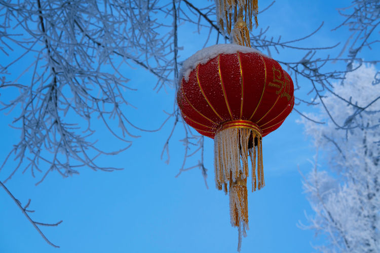 Low angle view of decoration hanging on tree against sky