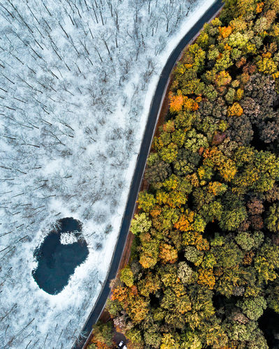 Directly above shots of trees in forest