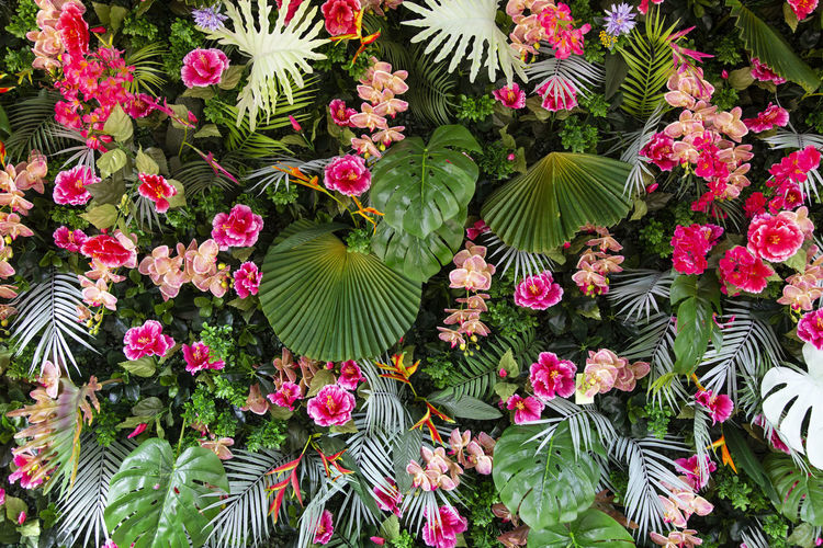 Colorful Tropical leaves foliage plant nature background. Flowering Plant Flower Plant Beauty In Nature Growth Freshness Nature Pink Color Plant Part Leaf Vulnerability  Fragility Green Color Day High Angle View No People Flower Head Petal Outdoors Inflorescence Flower Arrangement Season  Jungle Wedding Decoration Flora Park Plant Beautiful