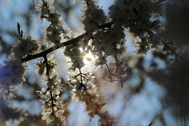 Low angle view of white flowers on tree
