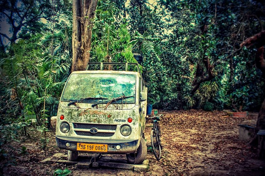 Tree Day No People Outdoors Communication Growth Green Color Nature Text Messy Life Old Vehicle Green Color Greenery Everywhere Greenery Scenery EyeEmNewHere Close Up Technology Wine Moments