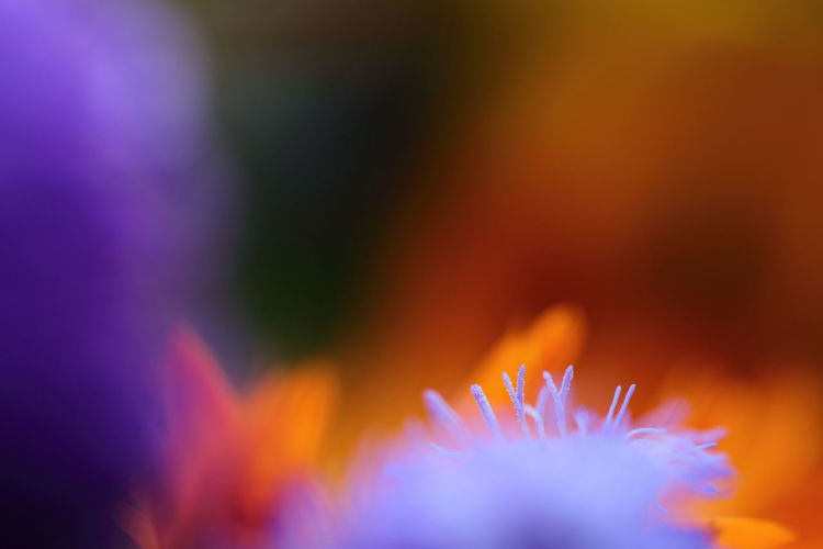 Individuality Painting With Light Close-up Expression Flower Flower Head Fragility Freshness Growth Impressionism Lila Color Multi Colored Orange Color Painting With A Camera Pastel Colors Petal Sensuality Photo Simplicity Splash Striving For Excellence Striving For Perfection