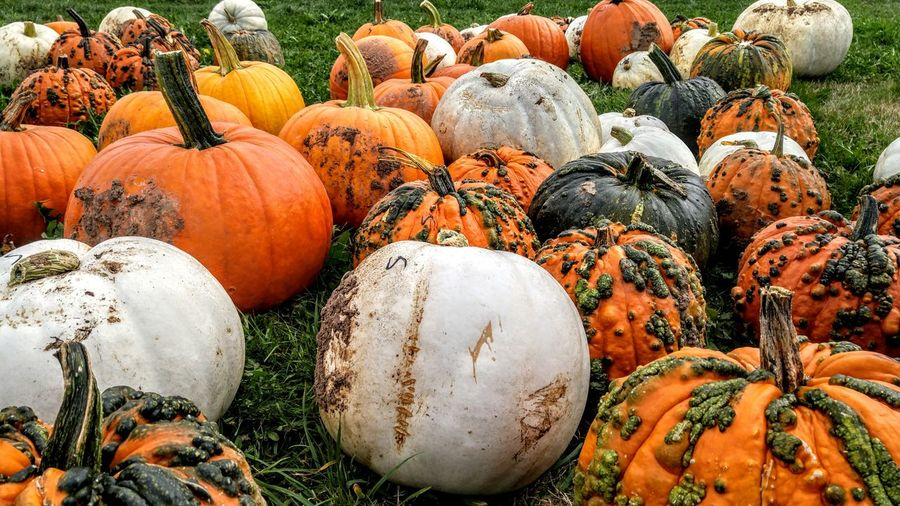 Close-up of pumpkins on field at market during autumn