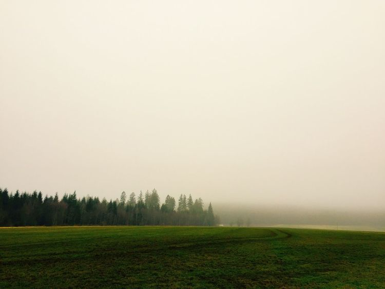 Morgens Nature Agriculture Beauty In Nature Tranquility Field Landscape Rural Scene Tranquil Scene Scenics Farm No People Outdoors Tree Fog Day Sky Black Forest Königsfeld