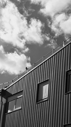 Building Factory Building Building Exterior Buiding And Sky Sky And Clouds Lines And Angles Lines And Patterns Bird Windows Blaxkandwhite My Black & White World Eye4photography  EyeEm Gallery