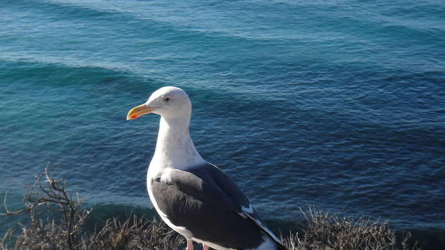 PISMO BEACH CALIFORNIA USA Animal Themes Animals In The Wild Balance Beak Bird Carefree Composition Escapism Flying Full Length Getting Away From It All Motion One Animal Outdoors Sea Seagull Side View Two Animals Water Wildlife Zoology