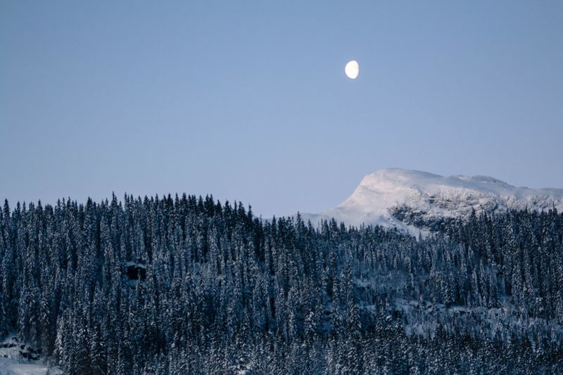 Moon Sky Mountain Scenics - Nature Snow Beauty In Nature Tree Plant Cold Temperature Tranquility Winter Nature Environment Full Moon No People Landscape Tranquil Scene Non-urban Scene Mountain Range Outdoors