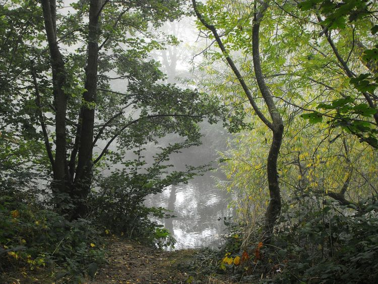 """We must be willing to get rid of the life we've planned, so as to have the life that is waiting for us."" Joseph Campbell. .. Trees Foggy Fog River Severn Newtown Powys осень Autumn Otoño Wales туман"