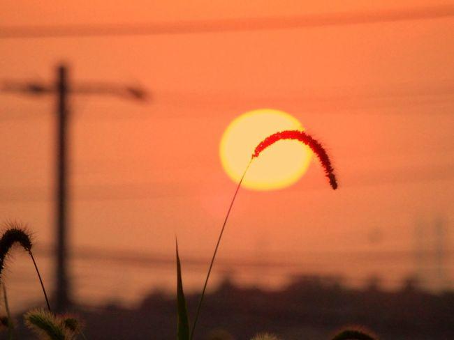お疲れさま( ´ ▽ ` )ノ OLYMPUS SH-50 Sun Set