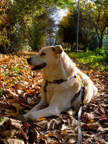 Wishy A Dogs Life Chilling Dog Autumn Indian Summer Bestfriend Leaves I Love My Dog Pet Portraits
