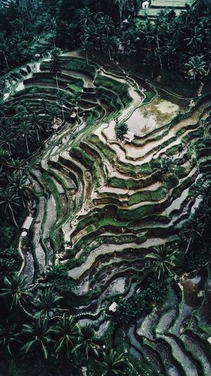 Rice terraces in Bali. Nature Bali, Indonesia Rice Terraces Dji Drone  Full Frame No People Pattern Nature Landscape Environment Backgrounds Green Color Plant Tree Outdoors Agriculture Growth Terrace