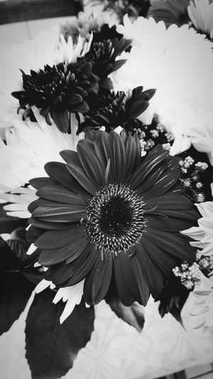 🌸 Flower South Africa Beautiful Nature Black And White