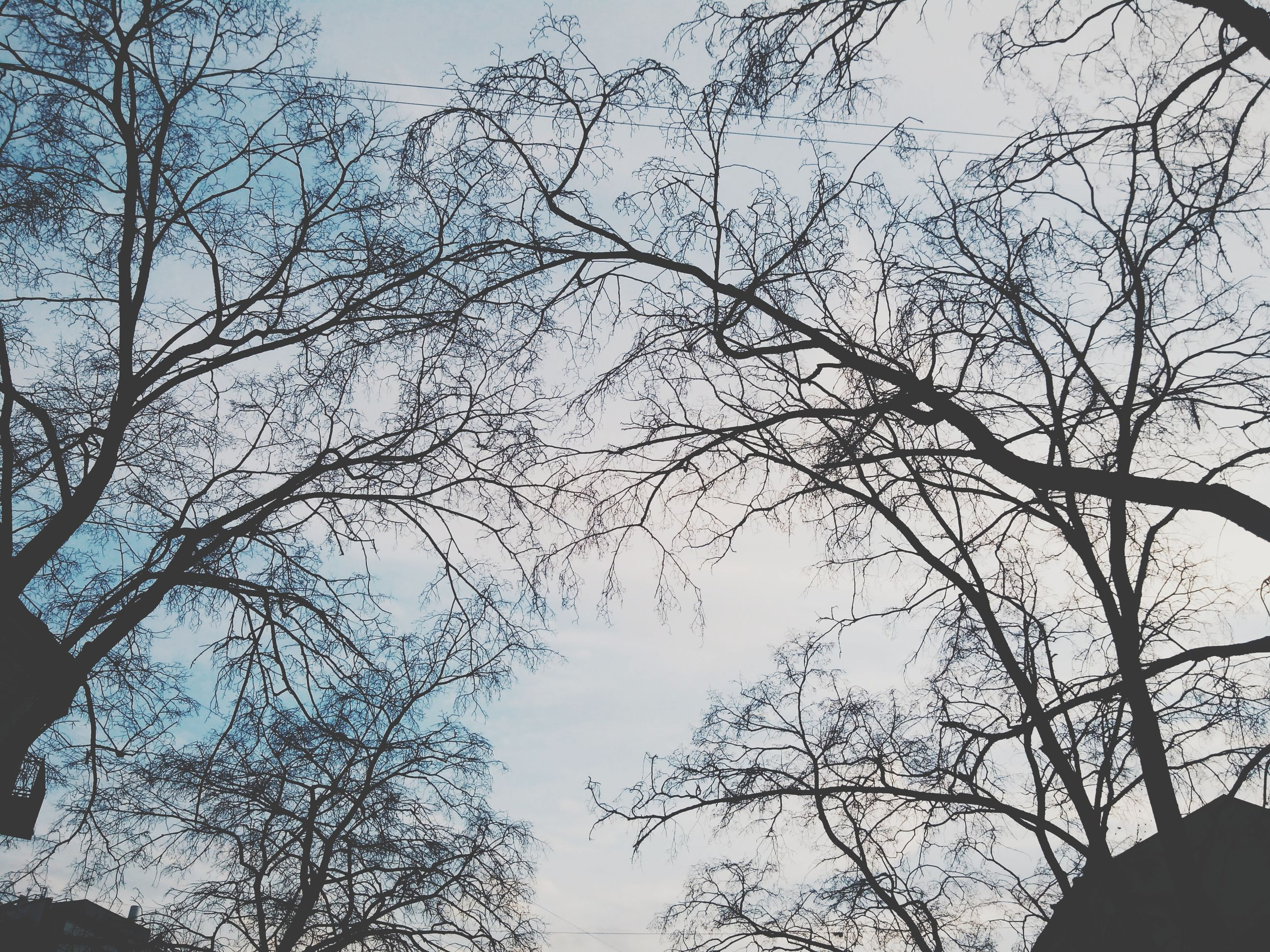 tree, low angle view, branch, bare tree, silhouette, sky, nature, tranquility, clear sky, beauty in nature, growth, outdoors, no people, high section, tree trunk, scenics, day, dusk, tranquil scene, cloud - sky