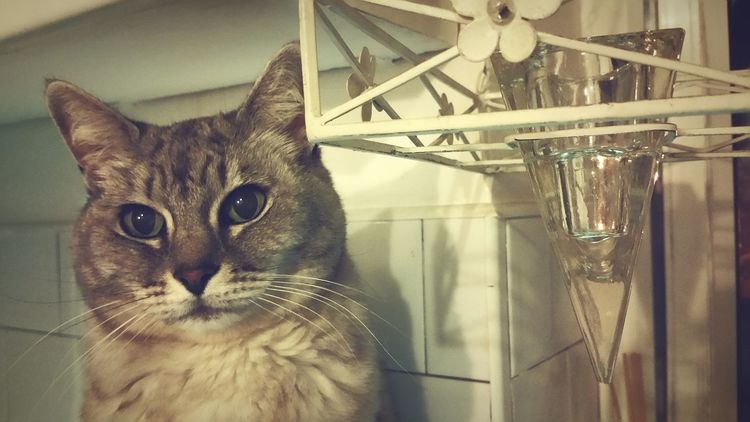 Kitchen Cat Cat Pet Feline Jodie Kitchen Cats Eyes EyeEm Eyes