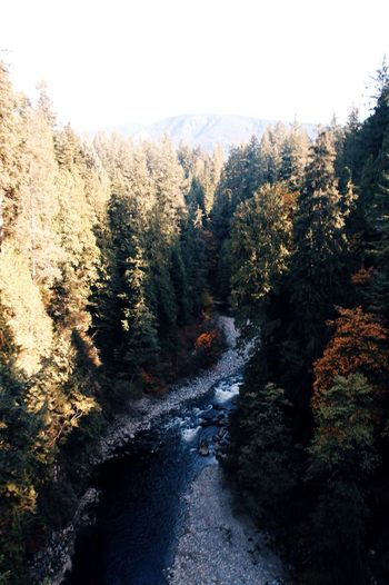 Vancouver, Canada. Vancouver Canada Canada Coast To Coast Trees Forest Brook Babbling Brook Travel Hiking Nature