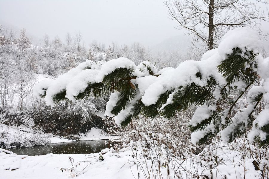 Snow Winter Cold Temperature Tree Nature Weather Snowing No People Beauty In Nature Outdoors Day Animal Themes Mammal Balta Berilovac East Serbia Serbia Stara Planina Tree Village Scene