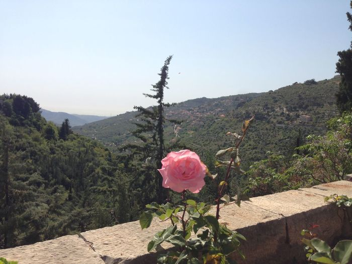 Plant Flower Beauty In Nature Flowering Plant Nature Growth Pink Color Sky Vulnerability  Freshness Fragility Mountain Rosé Day Tranquility Rose - Flower Tree Clear Sky No People Inflorescence Flower Head Outdoors