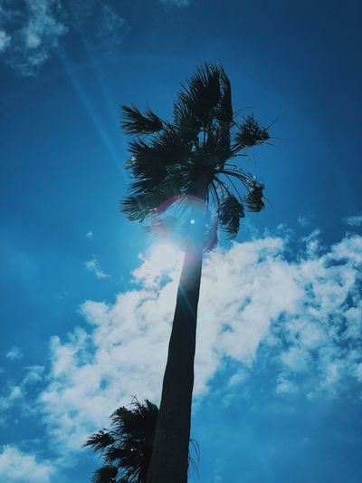 Tree Sky Plant Low Angle View Nature Cloud - Sky Growth Outdoors Blue Tropical Climate No People Palm Tree Day Tree Trunk Trunk