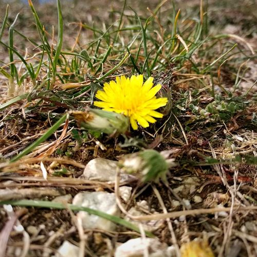 Flower Yellow Nature Animal Themes Fragility Day No People Outdoors One Animal Plant Beauty In Nature Petal Animals In The Wild Flower Head Close-up Grass Freshness Crocus