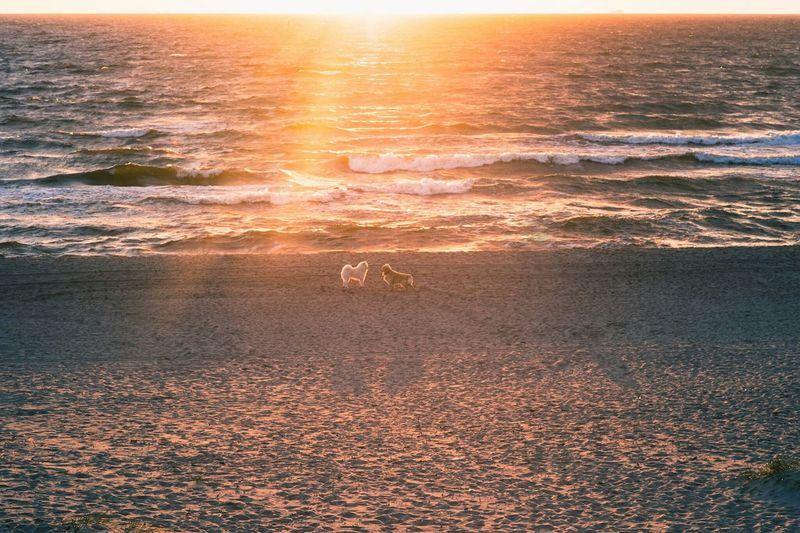 Wave Sea Sunset