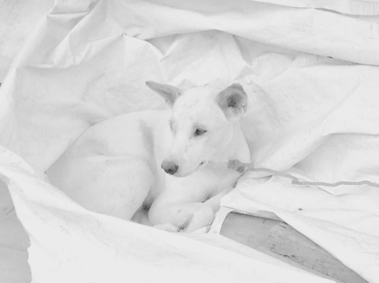 """The white dog"" Always find beauty in everything, the true beauty is in the eyes of the beholder. Animal Dog Pets One Animal Animal Body Part Domestic Animals No People Day Outdoors White Color EyeEmNewHere"