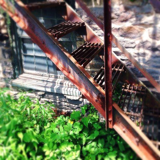 Stairs Vintage Rust Ivy IPhone5