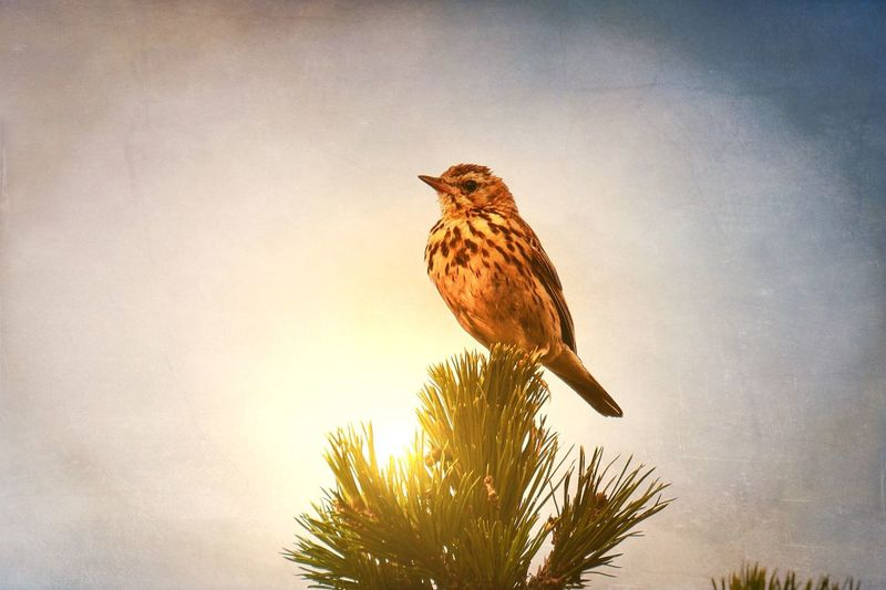 Adapted To The City Bird Animal Themes Nature One Animal Animals In The Wild Animal Wildlife Low Angle View No People Perching Branch Tree Outdoors Sky Day Beauty In Nature Nature Sky And Clouds Blue Sky Sun Light Tree Fragility Relaxing Waiting