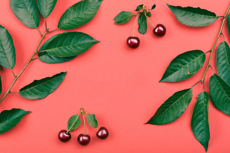 Leaves, berries of cherry tree on red background. Minimal style. Copy space room for text Leaf Red Indoors  No People Freshness Nature Plant Leaves Berry Berries Cherry Cherries Compostion Dessert Fruit Minimal Layout Juicy Simple Copy Space Style Flat Lay Flat Spring Summer