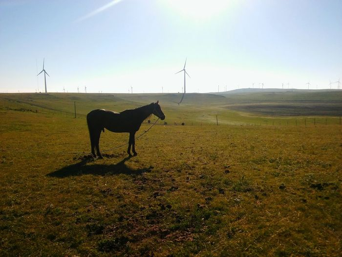 Silhouette horse standing on grassy field against sky during sunny day