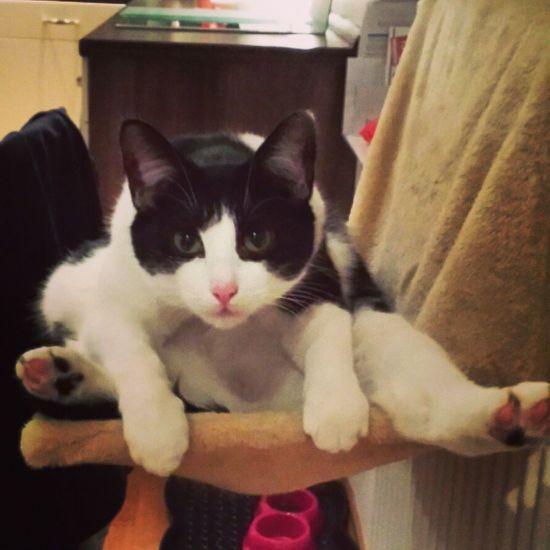 Hanging Out Cat♡ Miezekatze Love♥