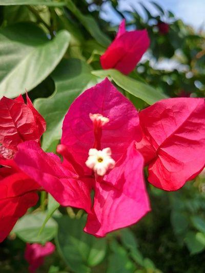Flowers,Plants & Garden Secret Garden Visualmagic Naturelovers