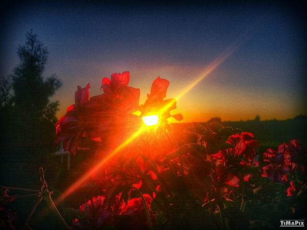 HDR Sunset Flowers Nature