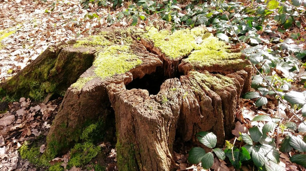 Tree Stump Forest Sunny Nature Sunlight Tree Growth Outdoors Beauty In Nature Moss Vibrant Color