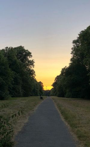 Sunset over the Woods Woods Plant The Way Forward Direction Road Sunset Diminishing Perspective Beauty In Nature Tranquility Scenics - Nature No People vanishing point