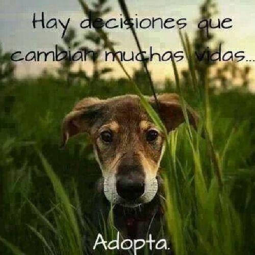 Hay decisiones que cambian muchas vidas ... Adopta Loveranimal Insta_animal Igersperu salvavidas dogandcat