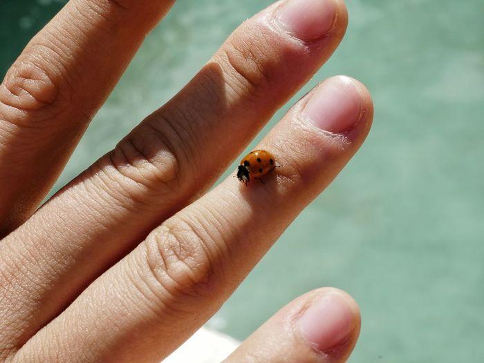 Cropped Image Of Hand Holding Ladybug