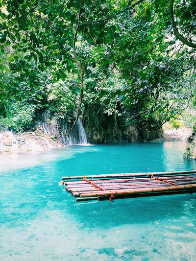 Cyan Teal Summer The Essence Of Summer Philippines Blue Foliage Green Waterfalls Kawasan Falls Cebu Philipines Wanderlust