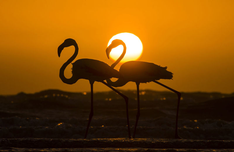 Close-up of silhouette bird on land against sunset sky