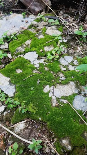 Grass Green Color Stone - Object Rock - Object Ground