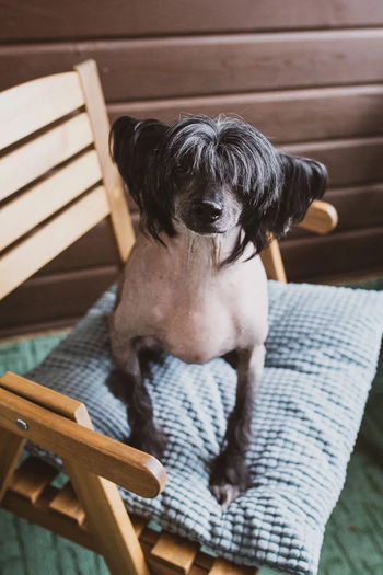 High angle view of dog sitting on chair
