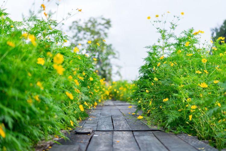 Footpath amidst plants in park