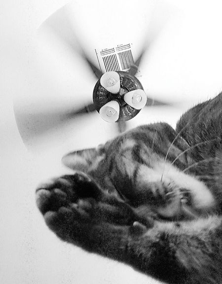 Check This Out Taking Photos Cat Content Cat Life