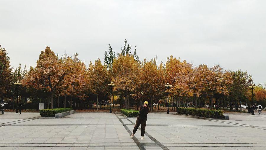 Tree Plant City